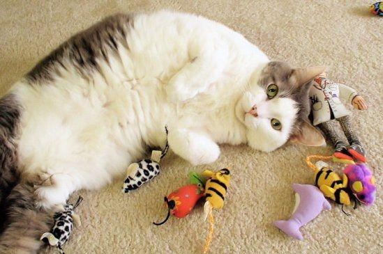 Игрушки для котов: разнообразие и выбор.  Игрушки для котов удовлетворяют их потребность в охоте за «добычей», развивают поведенческие навыки, способствуют физической активности. Животное, живущее в помещении, часто начинает портить мебель или попадает в неприятности, регулярные игры отвлекают его от подобных развлечений. Агрессивный кот вымещает агрессию на игрушке... Читать дальше на сайте МОЙ ПИТОМЕЦ в статье: - http://my-pitomec.ru/igrushki-dlya-kotov-raznoobrazie-i-vybor