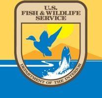 "Watch US Fish and Wildlife's Vine, ""Steelhead hatching at Quilcene National Fish Hatchery."""