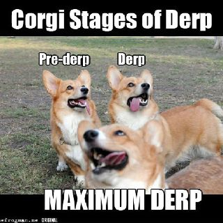 CorgiLaugh, Dogs, Corgis Staging, Stuff, Funny Animal Pictures, Things, Corgis Derp, Inspiration Quotes, Giggles