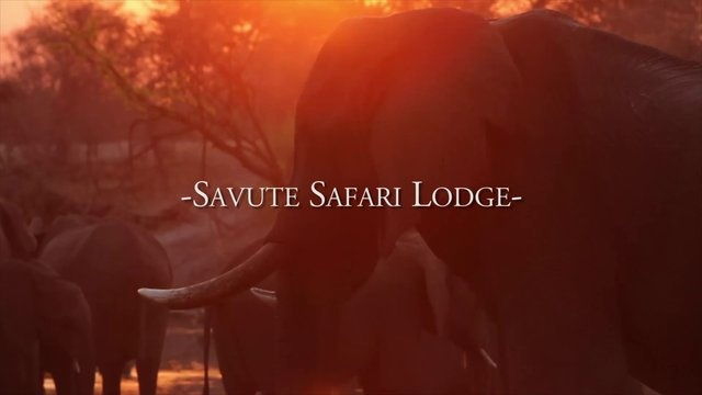 Savute Safari Lodge by Desert & Delta Safaris. Located in a remote area of Southern #Chobe National Park, #Botswana,  Savute Safari Lodge offers the visitor to this area an incredible insight into one of the most renowned and unpredictable wildlife areas in Africa.