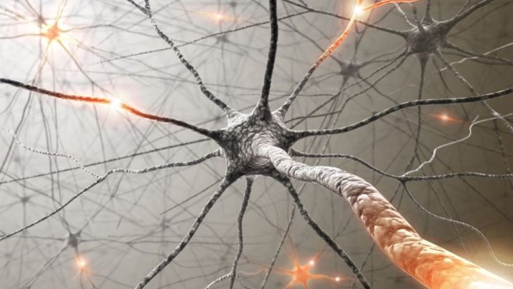 Tau protein, not plaque, may cause Alzheimer's, study says | Fox News