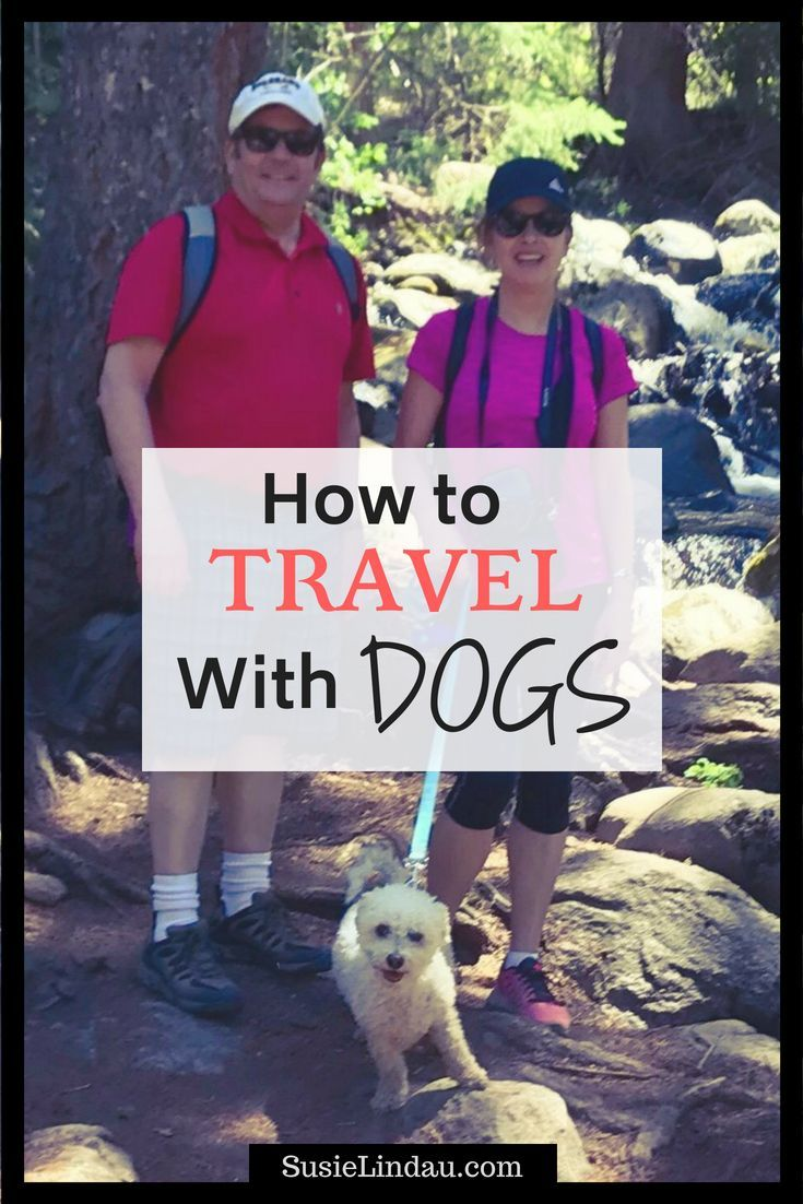 Find out how to Journey with Canine