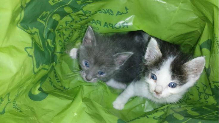 Rescate de dos gatos abandonados.