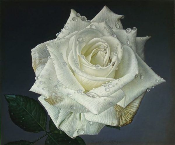 Delicate Hyper Realistic Paintings Of Roses By Gioacchino