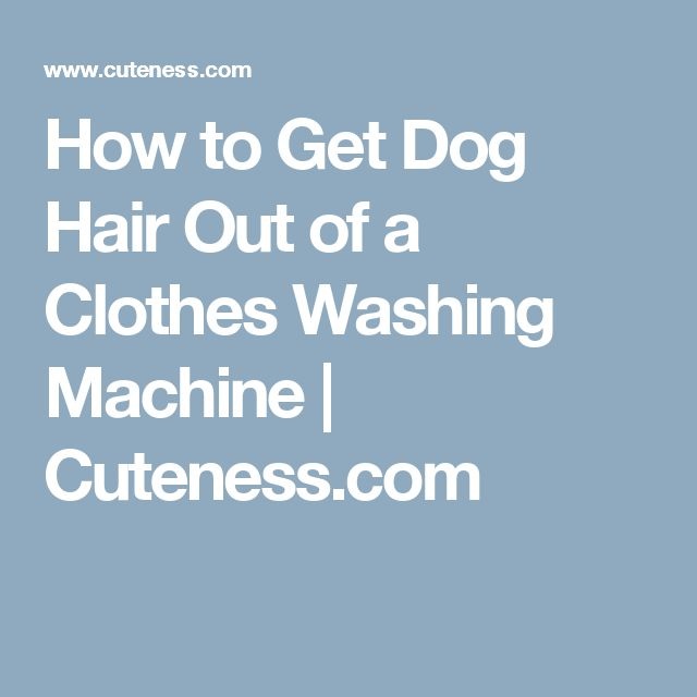 Best Way To Get Rid Of Dog Hair On Clothes