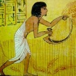 Scena di mietitura del grano. Particolare delle pitture murali dalla tomba di Sennedjem, Deir el-Medina (Egitto), 1500-1050 a.C.