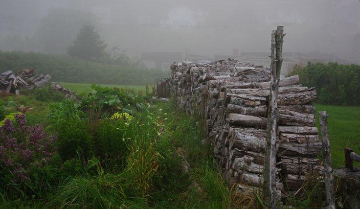 Morning fog   Tiverton NS