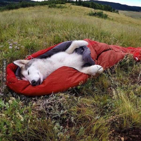 LOKI _ Keliling Dunia Dengan Anjing Peliharaan Itu Sesuatu Banget Ya!