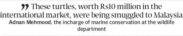 62 turtles 55 of them dead handed over to wildlife dept - The Express Tribune