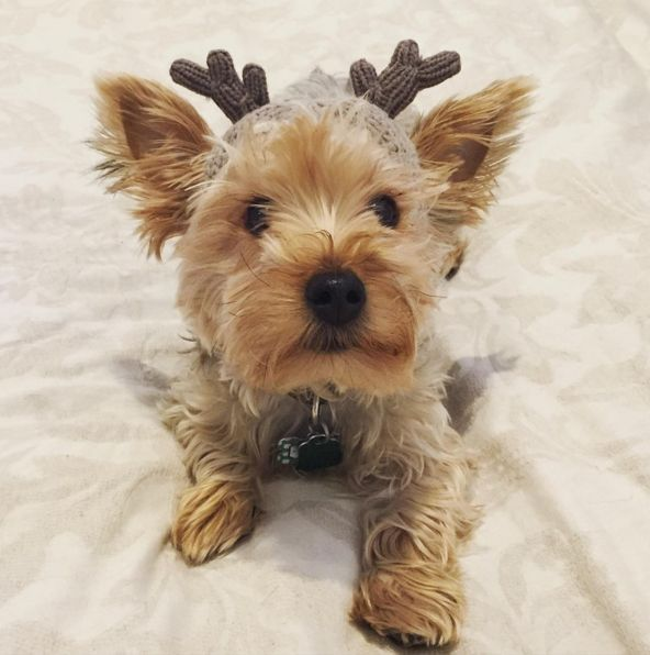On this #ChristmasEve, all we want is a dog as cute as @thedogduffy and #ABOSTYLE.