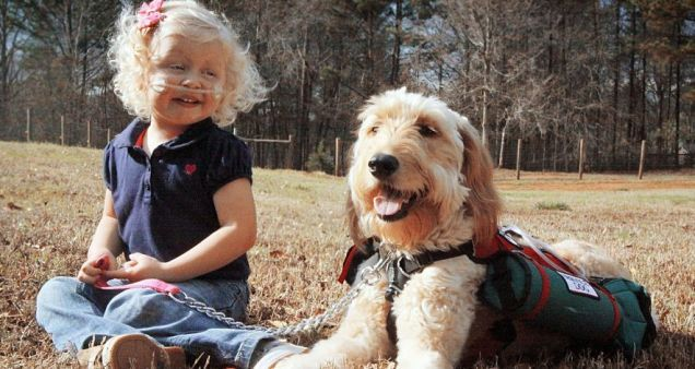 """""""Mr. Gibbs"""" carries a bottle of oxygen for three-year-old girl, helping provide her with independence.: Goldendoodle Carrie, Oxygen Tanks, Pet Dogs, Gibb, Teaching Kids, Service Dogs, Help Providence, Animal, Three Years Old Girls"""