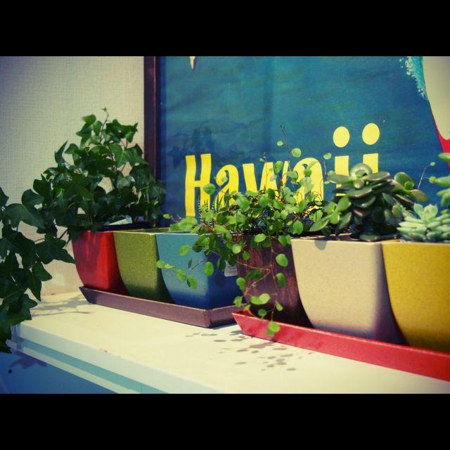 ミッドセンチュリー/観葉植物/雑貨/バス/トイレ/エコフォームズ/グリーン…などのインテリア実例 - 2015-01-25 20:29:23 | RoomClip(ルームクリップ)