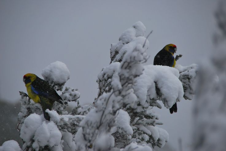 Winter on the Overland Track with Cradle Mountain Huts
