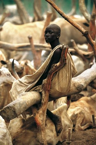 Africa | Dinka.  River Nile Grazing | © Carol Beckwith and Angela Fisher