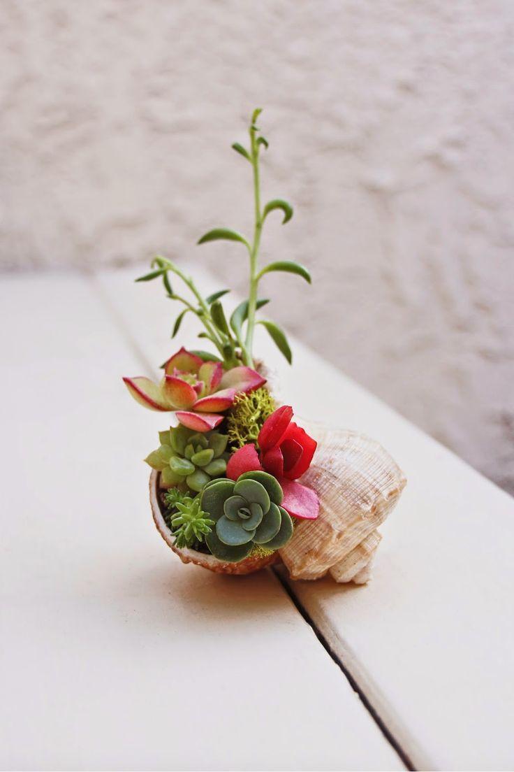 Mini succulent seashell arrangement.