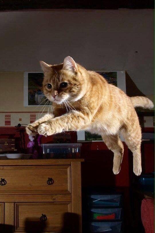 150 Best Cats Gray Amp Orange Images On Pinterest Cats