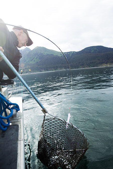 Pesca de salmão no Alasca: uma atividade rigorosamente controlada