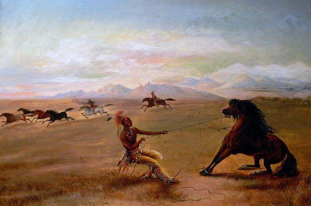 Mustang, i cavalli selvaggi americani