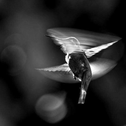 Hummingbird: Guardian Hummingbirds, Angels Hummingbirds, Hum Birds, Hummingbirds Aroundtheworld, Hummingbirds Happy, Animal Beautiful, Ahhhh Hummingbirds, Backyards Lik Summer, Birds Hummingbirds