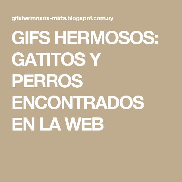GIFS HERMOSOS: GATITOS Y PERROS ENCONTRADOS EN LA WEB
