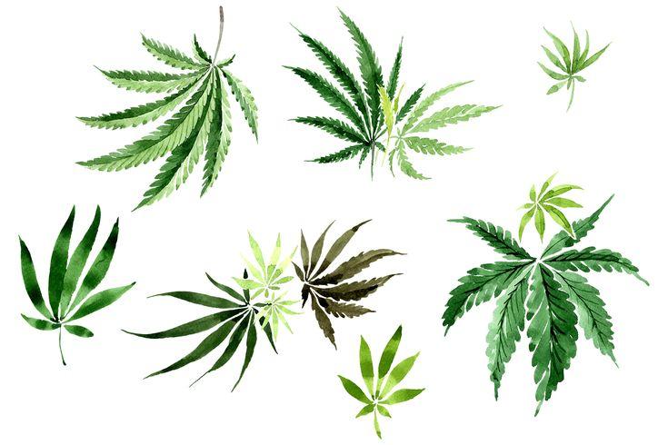 Leaves Hemp Plant Watercolor Png Graphic By Mystocks Creative Fabrica Watercolor Plants Hemp Art Plants