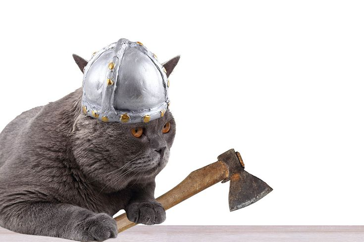 05/02/2017 · by carylsue · in Classroom Ideas, Current Event Connection, geography, Main. ·SCIENCEThousands of years before cats came to dominate Internet culture, they swept through ancient Eurasia and Africa, carried by farmers, mariners and even Vikings. So finds the first large-scale look at anci