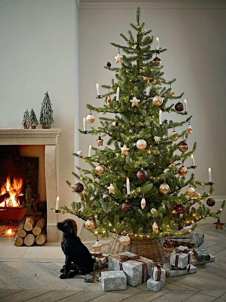 NEW Premium Pre-lit Christmas Tree. 2.1m £300. A perfect tree with a black Labrador puppy under it!