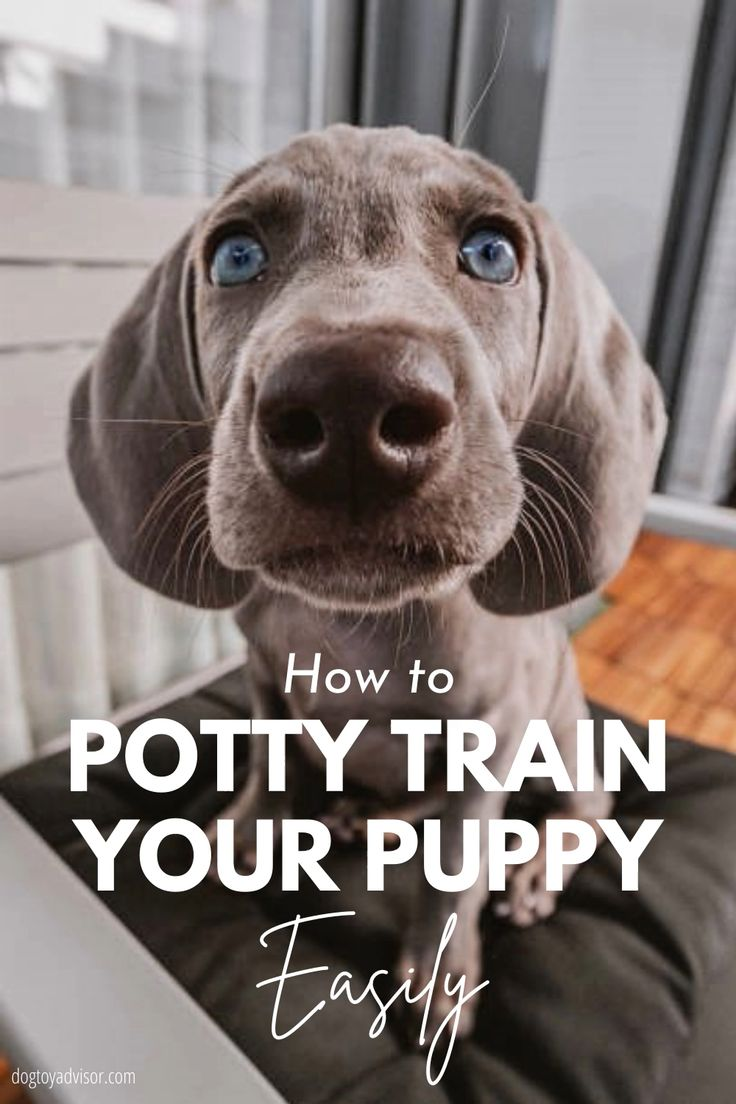 How to stop your dog from peeing in the house video