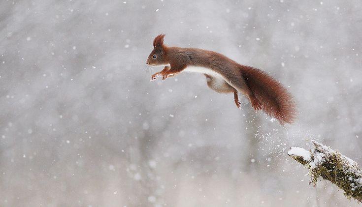 Schneerakete...