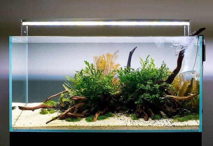 www.ibrio.it your aquarium born here ! il tuo acquario nasce qui ! https://www.facebook.com/ibrio.it via web #ibrio #acquario #acquari #acquariologia #acquariofilia #aquarium #aquariums #piante #natura #pesci #zen #design #arredamento #layout #layouts #layoutdesign #roccia #roccie  #moss #freshwater #plantedtank #aquadesignamano #tropicalfish #fishofinstagram #aquaticplants #natureaquarium #nanotank #reefkeeper #nanoreef #saltwateraquarium