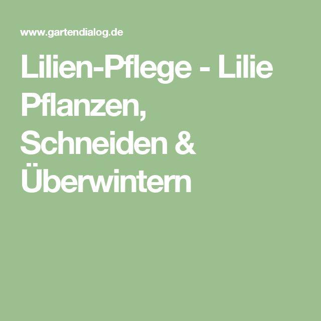 Lilien-Pflege - Lilie Pflanzen, Schneiden & Überwintern