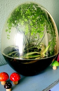 Green Living With Live Terrarium Plants In Cozy, Indoor Homemade Terrarium  Garden