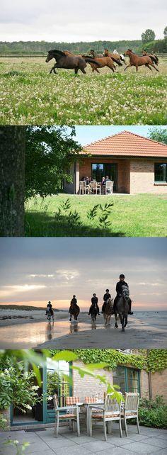 Reiterhof-Urlaub direkt am Meer!  Ferienhäuser, Wohnungen & Reitherberge.