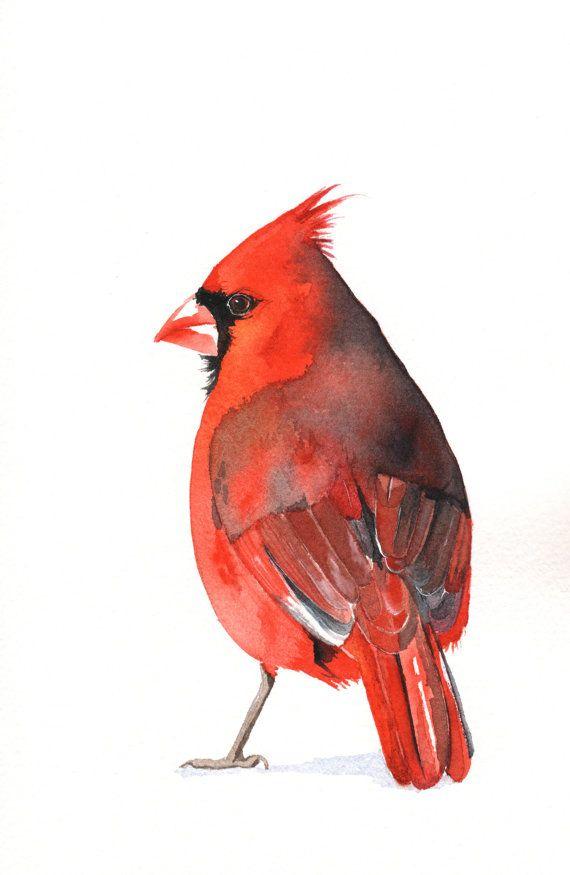 Cardinal watercolor painting Bird art wildlife by Splodgepodge