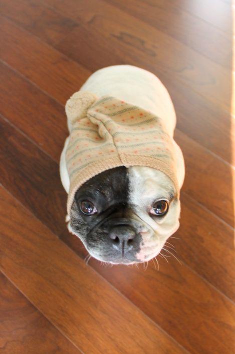 Pasamontañas Twilight Disponible en: http://www.dogsaffaire.com/complementos/pasamontanas-twilight-316.html  La mejor selección de productos para perro. Moda para perro. Accesorios para perro. Pinkaholic