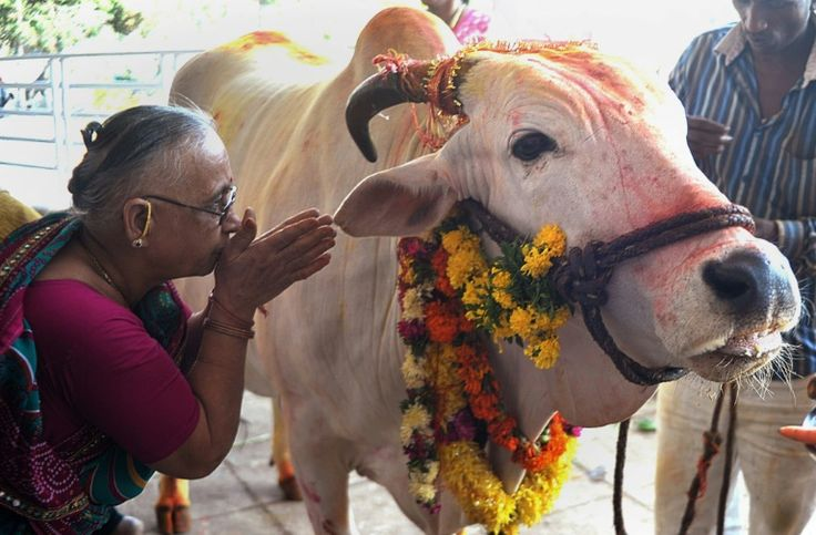 Indian state to challenge Modi's cow slaughter ban