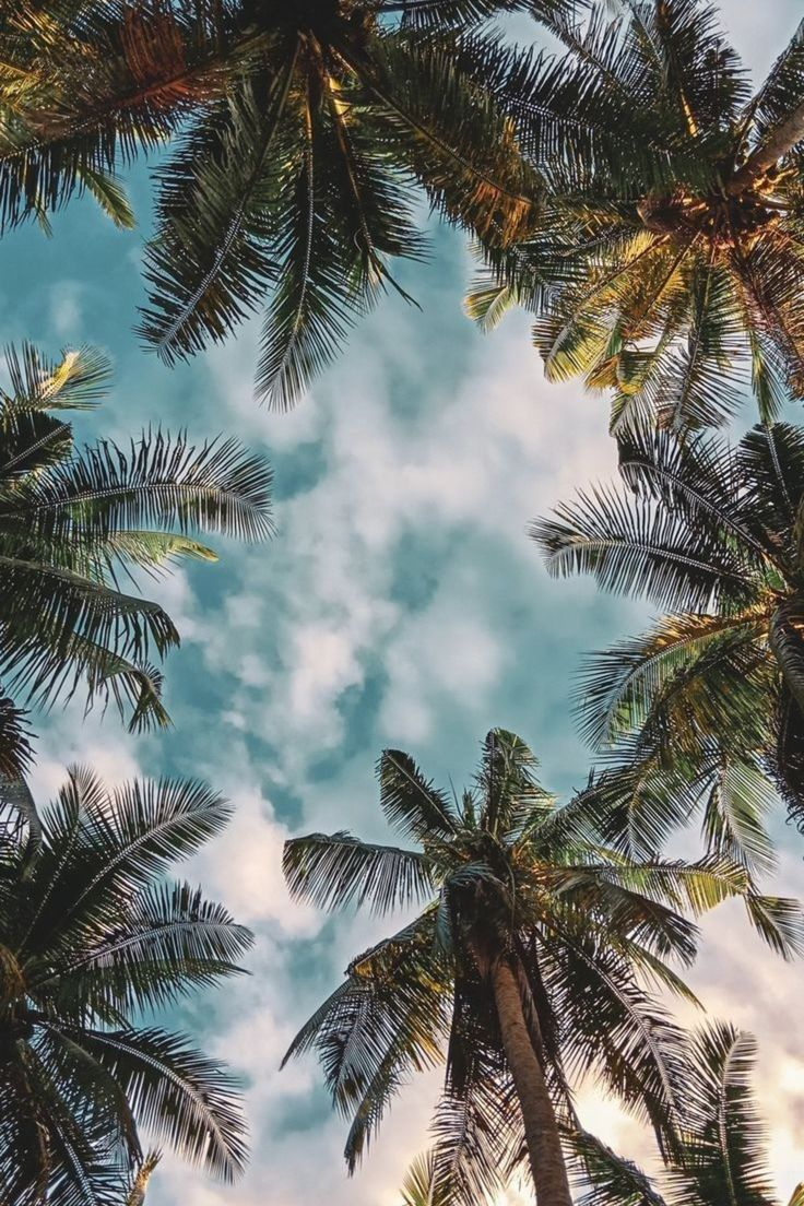 The palm life is a life style that is lived day to day by