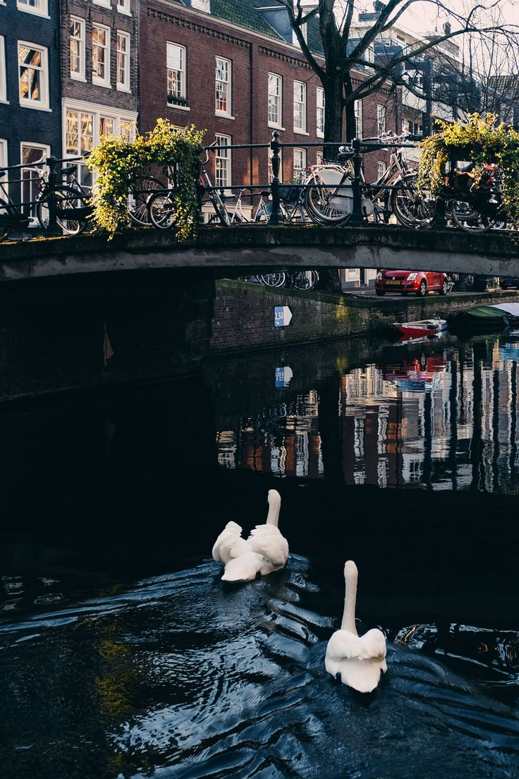 jordaan-amsterdam-travel-guide-photo-diary-jess-ann-kirby-craig-mackay-photography-3