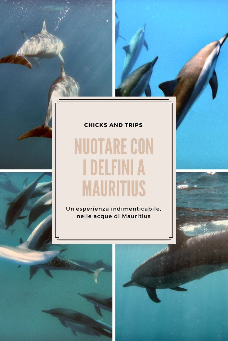 Mauritius In Mare Con I Delfini Foto Di Viaggio Fotografia Di