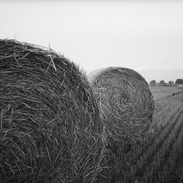 Hay rolls / Szalmabálák Hasselblad 500C/M Distagon 50mm f4 C Sekonic L-308S Light meter  Ilford Pan 100 120 film (discontinued) expired in 2005. Developed in LC29 (119 8min 20deg) Exposed this roll at ISO 50 because of the expiration but the negative turned out to be a bit dark next time I'm gonna expose it to 100 or develop it only 6-7min. hay bale rolls rural scene szalma bálák hasselblad 500cm distagon 50mm f4 ilford pan 100 120 film analog discontinued exired bw blackwhite blackandwhite…