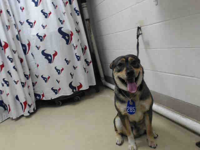 01/21/17 - HOUSTON - SUPER URGENT - This DOG - ID#A476002 I am a male, black and brown German Shepherd Dog and Rottweiler. My age is unknown. I have been at the shelter since Jan 21, 2017. This information was refreshed 52 minutes ago and may not represent all of the animals at the Harris County Public Health and Environmental Services.