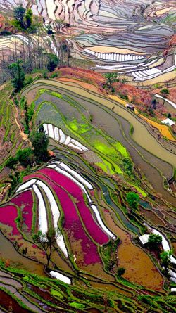 Longji, China... land art landscape photography