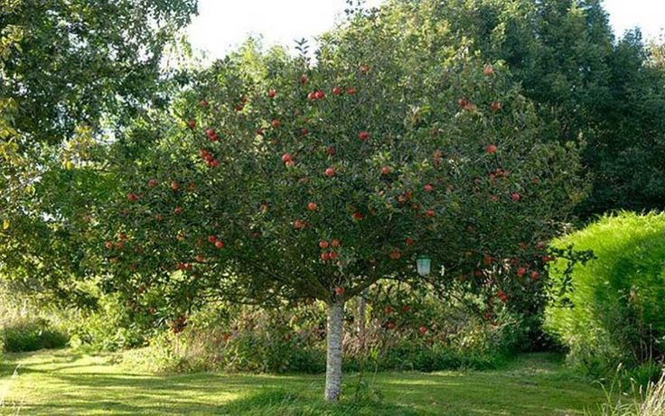 Our gardening agony aunt offers advice about how to move an apple tree, deal   with a weedy path and aid an ailing dogwood