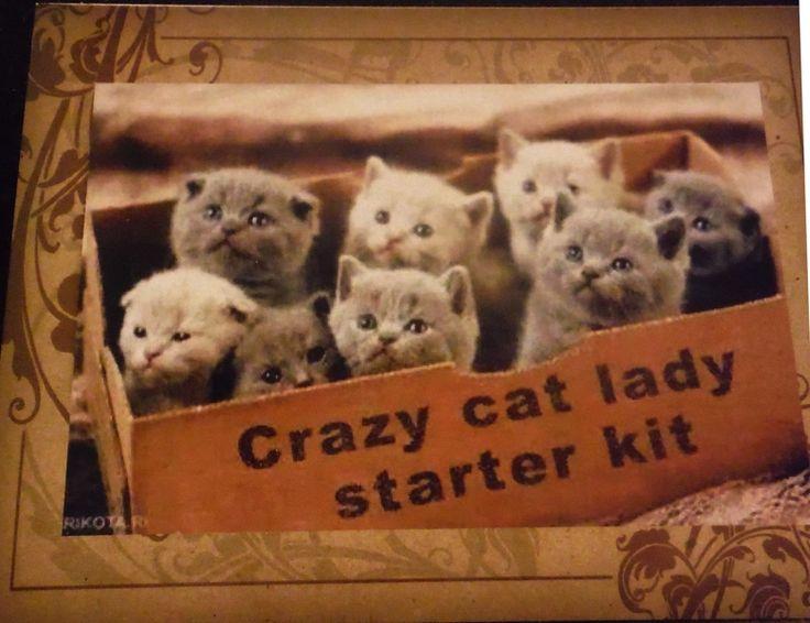 Postcards Quot Crazy Lady Cat Starter Kit Quot Listia