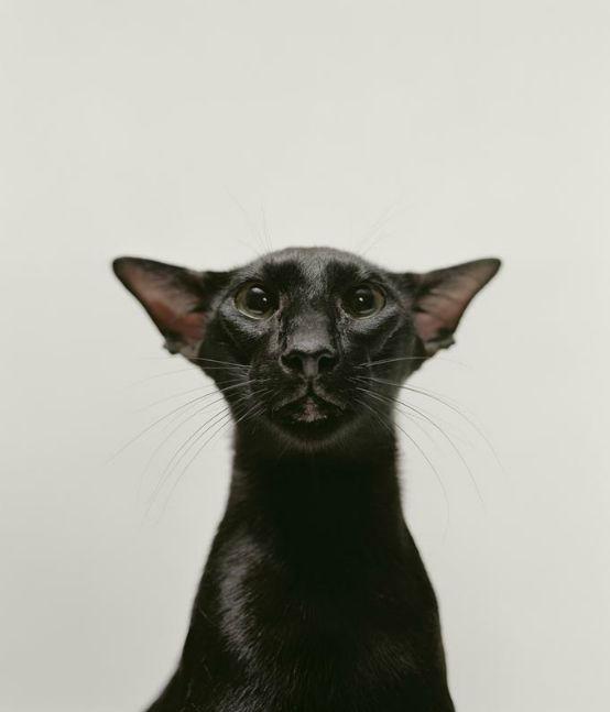 haute catture, naomi in catsuit