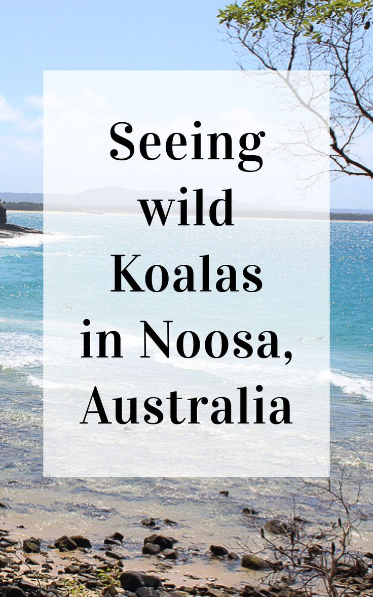 Continuing on with my Australian East Coast road trip, the next stop along the way was the beautiful and iconic Noosa. Known to most for it's stunning beaches, laid back atmosphere and popular shopping streets but known to me as the most likely place on the east coast to spot a wild Koala! / Clutch & Carry-on