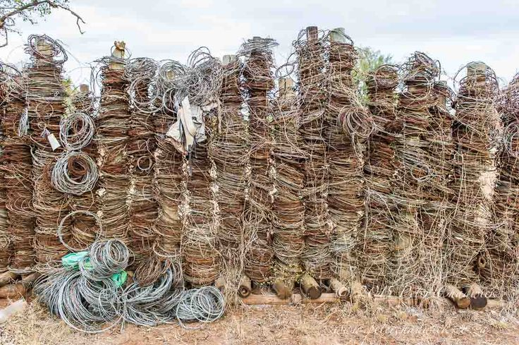 Deadly wall of snares by conservation photographer Peter Chadwick