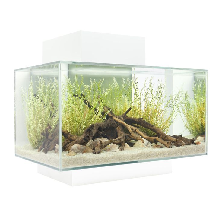 Hagen 6 Gallon Fluval Edge Aquarium Kit & Reviews | Wayfair