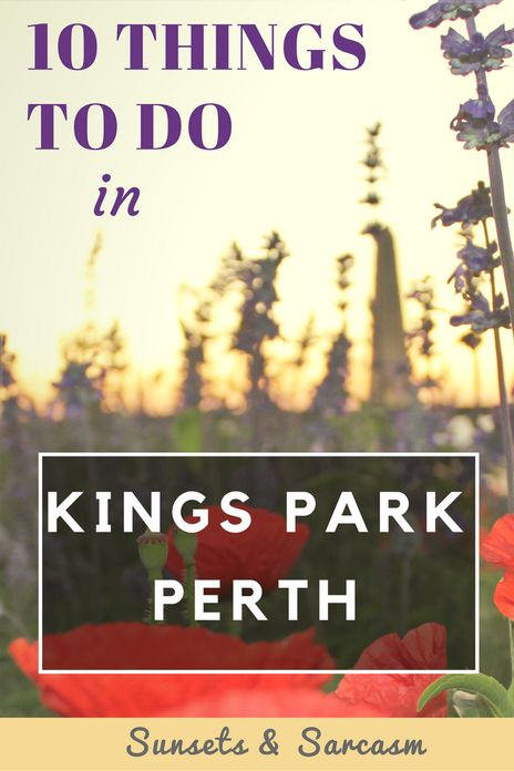 10 things to do in Kings Park, Perth, Australia. With beautiful Botanic Gardens, multiple walking trails and viewpoints with spectacular views across Perth city and the Swan River (especially to see the Perth sunrise or sunset), a visit to Kings Park is one of the best things to do in Perth. Read my guide to find out where to go and what to do in Kings Park, Perth.