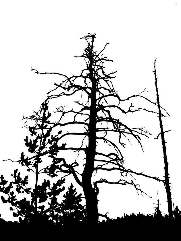 Também se considera que as árvores são uma fonte inesgotável de energia para o ser humano. De fato, há grupos que se dedicam a abraçar árvores para receber a energia que necessitam. Por outra parte, em algumas culturas se acredita que os espíritos podem habitar nas árvores, sendo, por esse motivo, objetos de adoração.